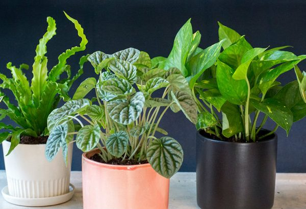 plants Plants To Decorate Your Coffee Table According To Your Zodiac Sign home plants 600x411